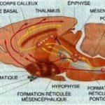 fonction-reticule-activatrice-du-cerveau