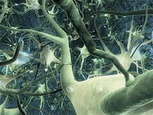 Mettez 100 000 000 milliards de combinaisons nerveuses à votre service