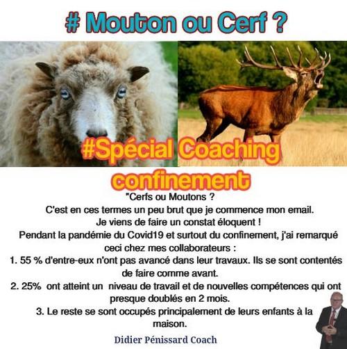 Etes-vous un mouton ou un cerf ?